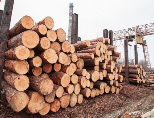 14 cech drewna istotnych ze względów konstrukcyjnych, cz. 1 (od 1 do 7)