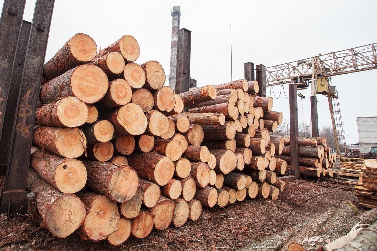 Dodatkowe 14 cech drewna istotnych ze względów konstrukcyjnych, cz. 1 (od 1 FR71