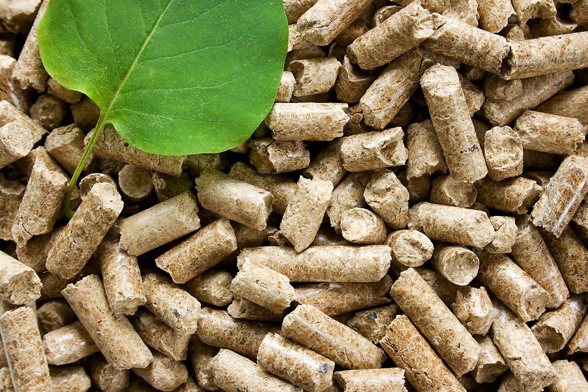 fotografia przedstawiająca biomasę i liść