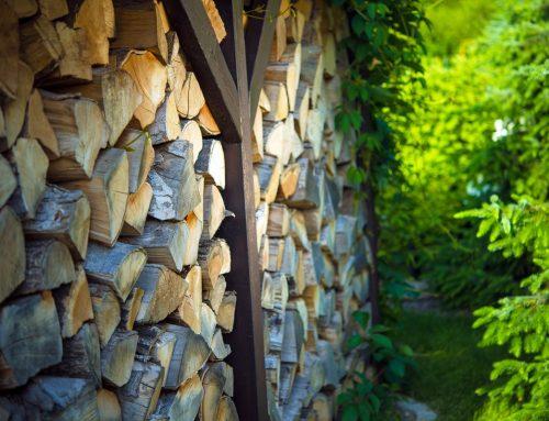 Kilka słów o właściwościach drewna jako surowca przemysłowego
