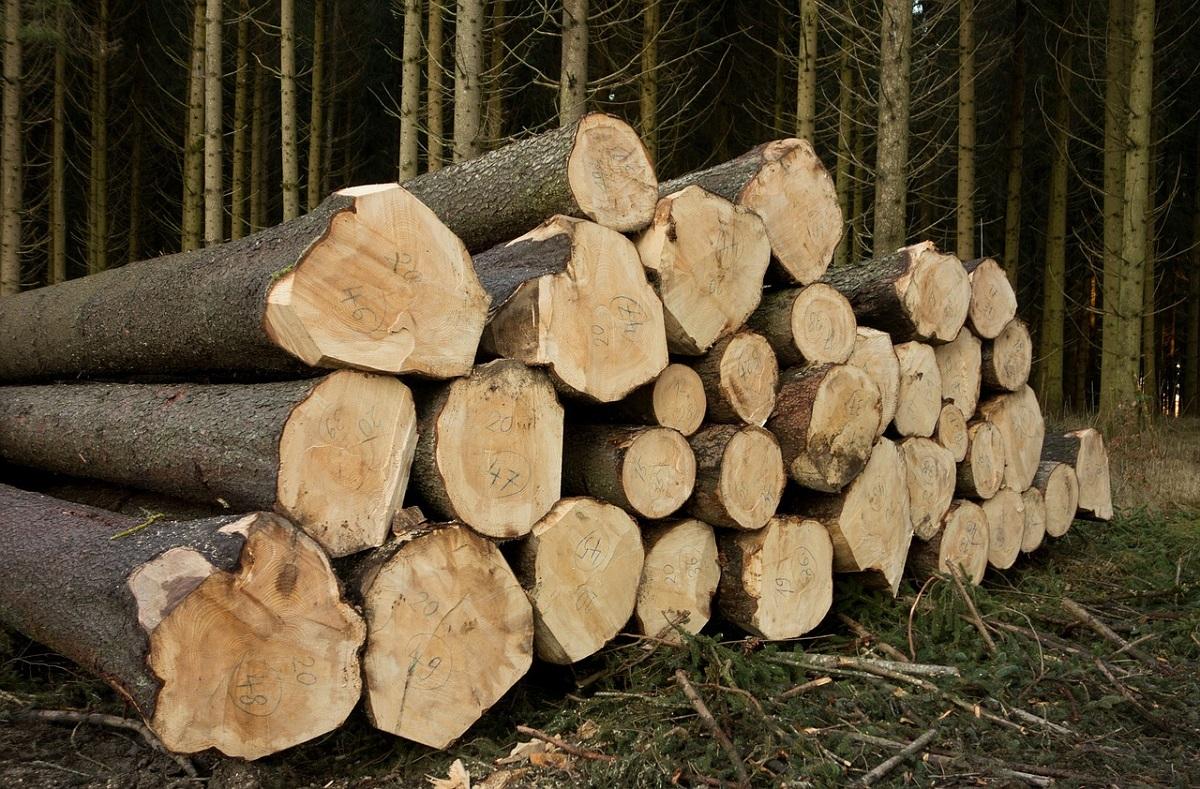 drewno świerkowe ścięte przez tartak consultor