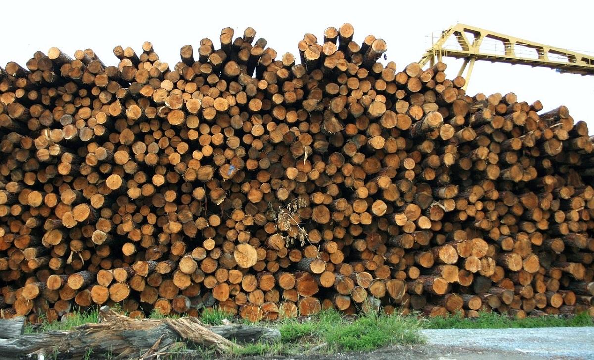 stos drzewa sosnowego w podlaskim tartaku Consultor