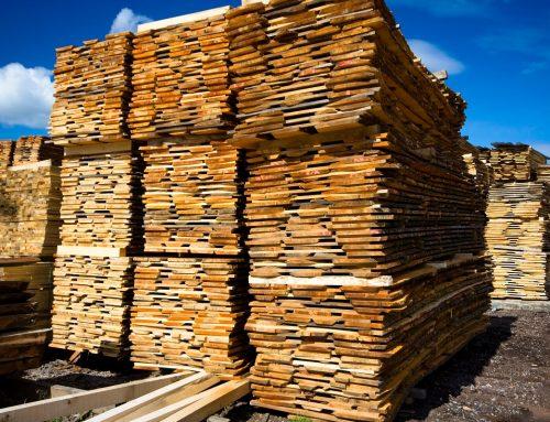 12 najpopularniejszych przemysłowych gatunków drewna