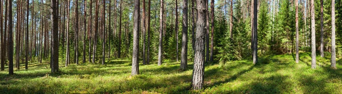 Las certyfikowany logiem FSC w Polsce