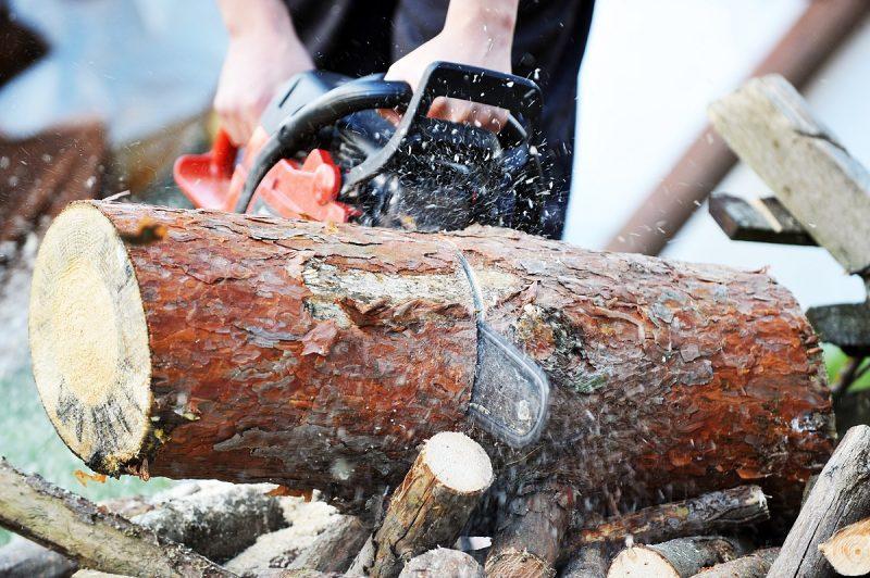 mężczyzna z piłą łańcuchową piłujący drzewo dębowe