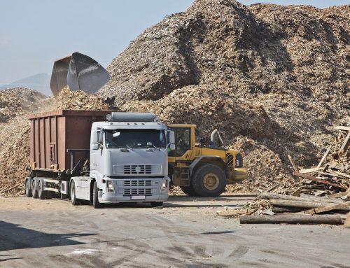 Biomasa: przewodnik dla zainteresowanych ekologią (cz. 2)