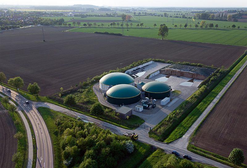 sektor biomasy w Polsce